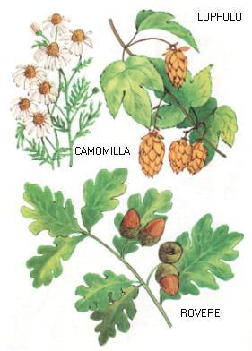 Camomilla - Luppolo - Rovere