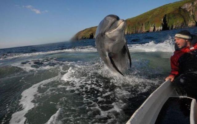 Questo delfino non ha previsto le conseguenze delle proprie evoluzioni