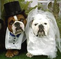 Il matrimonio la tomba dell'amore -
