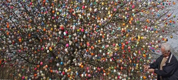 Germania: un albero con 9.500 piccole uova di Pasqua