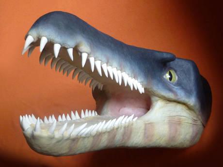 Scoperti a Bologna i resti del piu' antico coccodrillo del mondo -
