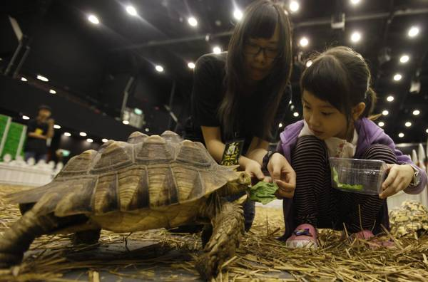 Faccia a faccia con la tartaruga all'nternational Reptiles Expo di Hong Kong -