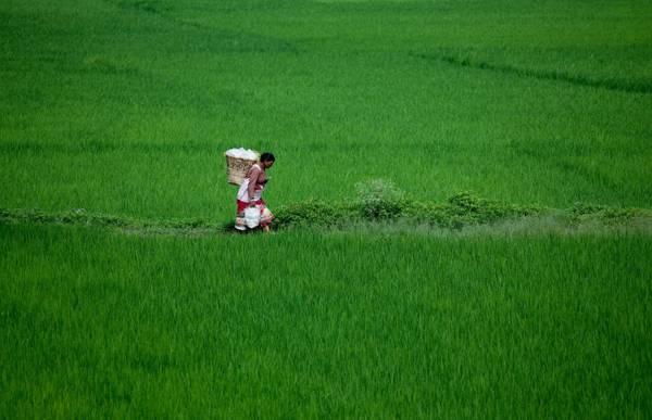 Nepal, i contadini ripuliscono i campi dalle erbacce -