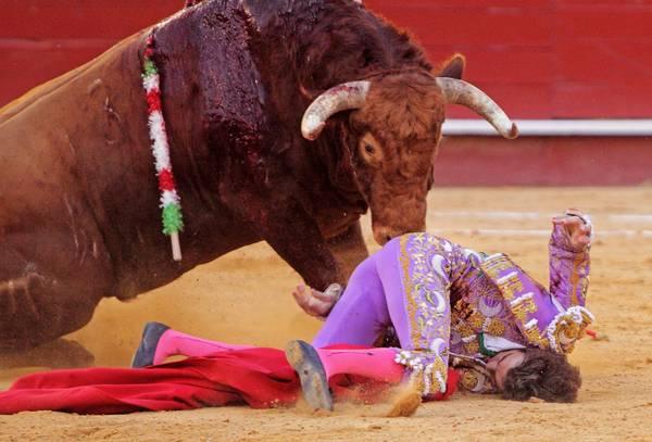 Corrida a Valencia, per una volta ha la meglio il toro -