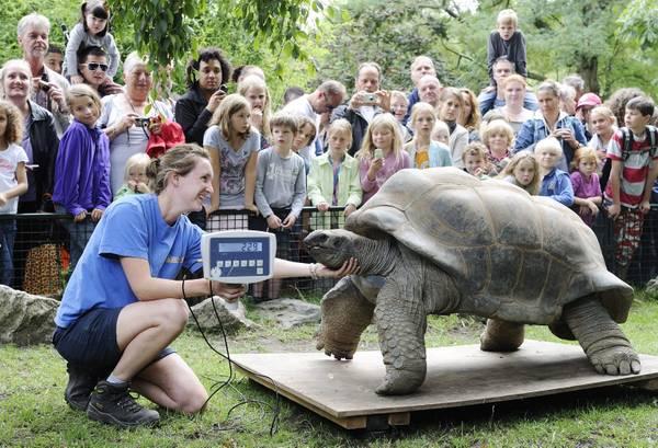 Allo zoo di Amsterdam, check-up per la tartaruga gigante -