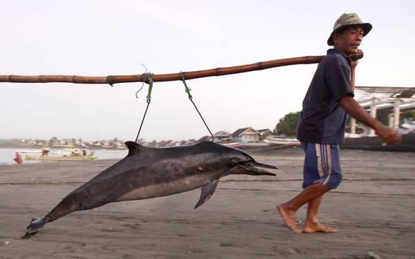 In Indonesia: bella pesca, ora va al mercato a venderlo -