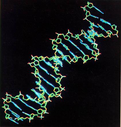 'Mia intelligenza diversa da tua', è scritto nei geni -