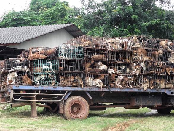 Bangkok, cani salvati in tempo: sarebbero stati uccisi e cucinati -