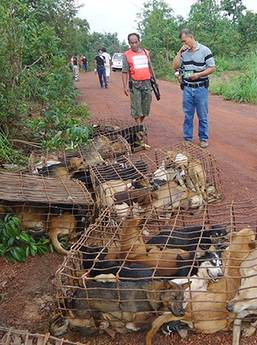 Thailandia: salvati 1000 cani, cuochi Vietnam senza pietanze -