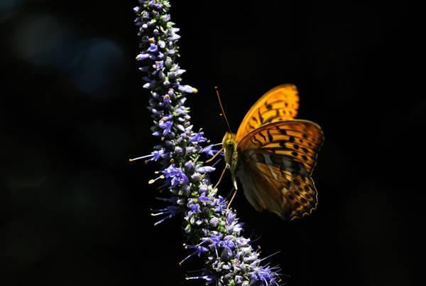A Hokkaido in Giappone, una favola: il fiore e la farfalla -