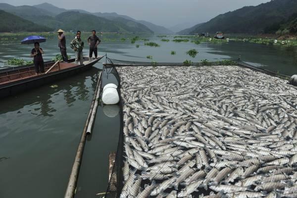 Cina: preoccupante moria di pesci causata da inquinanti -