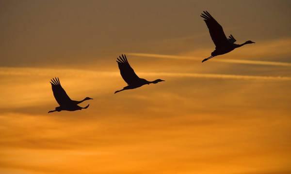 La migrazione delle gru nel cielo d'Ungheria -