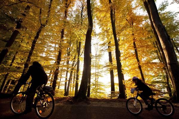 Lo splendido paesaggio autunnale della Foresta di Sauvabelin