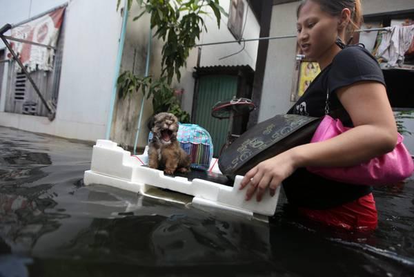 Bangkok, continuano i disagi... anche per i quattro zampe