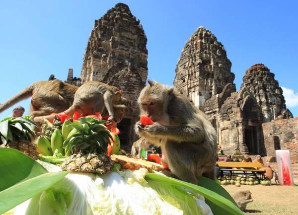 In Thailandia frutta e bibite per i macachi che ci vivono