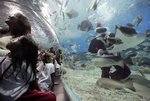 Manila, Babbo Natale in immersione tra i pesci dell'acquario