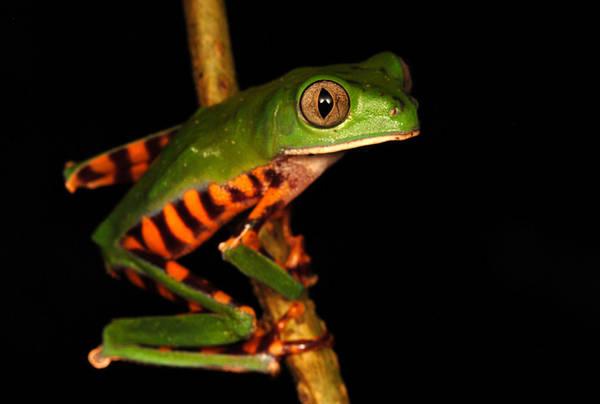 Ambiente: trovate 46 nuove specie animali, anche rana'cow boy'