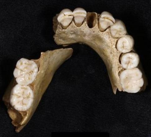Neanderthal, un destino già segnato. La popolazione era decimata già 50.000 anni fa