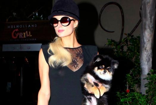 Paris Hilton e i suoi capezzoli fanno shopping, una sua creazione