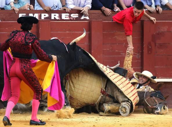 Il toro incorna un cavallo durante una corrida a Malaga