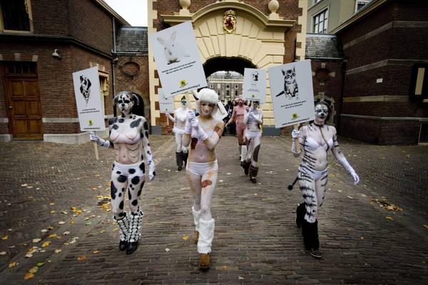 L'Aia, corteo degli animalisti olandesi 'Dierenbescherming'