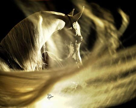 Cavallo. La più nobile conquista dell'uomo