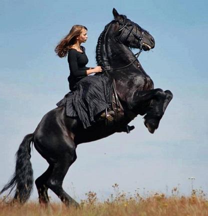 Cavallo: La più nobile conquista dell'uomo