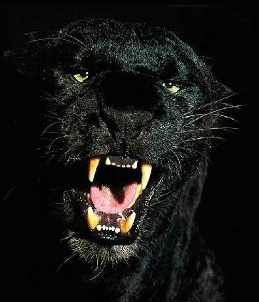 Nulla infonde più coraggio al pauroso della paura altrui